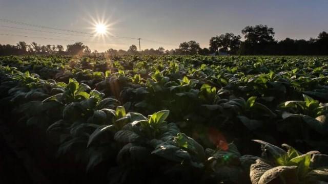 Capital Humano no Agronegócio: a chave para o sucesso