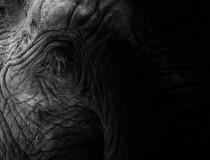 [Elephants, Rhinos & People (ERP): Um overview de 2020]